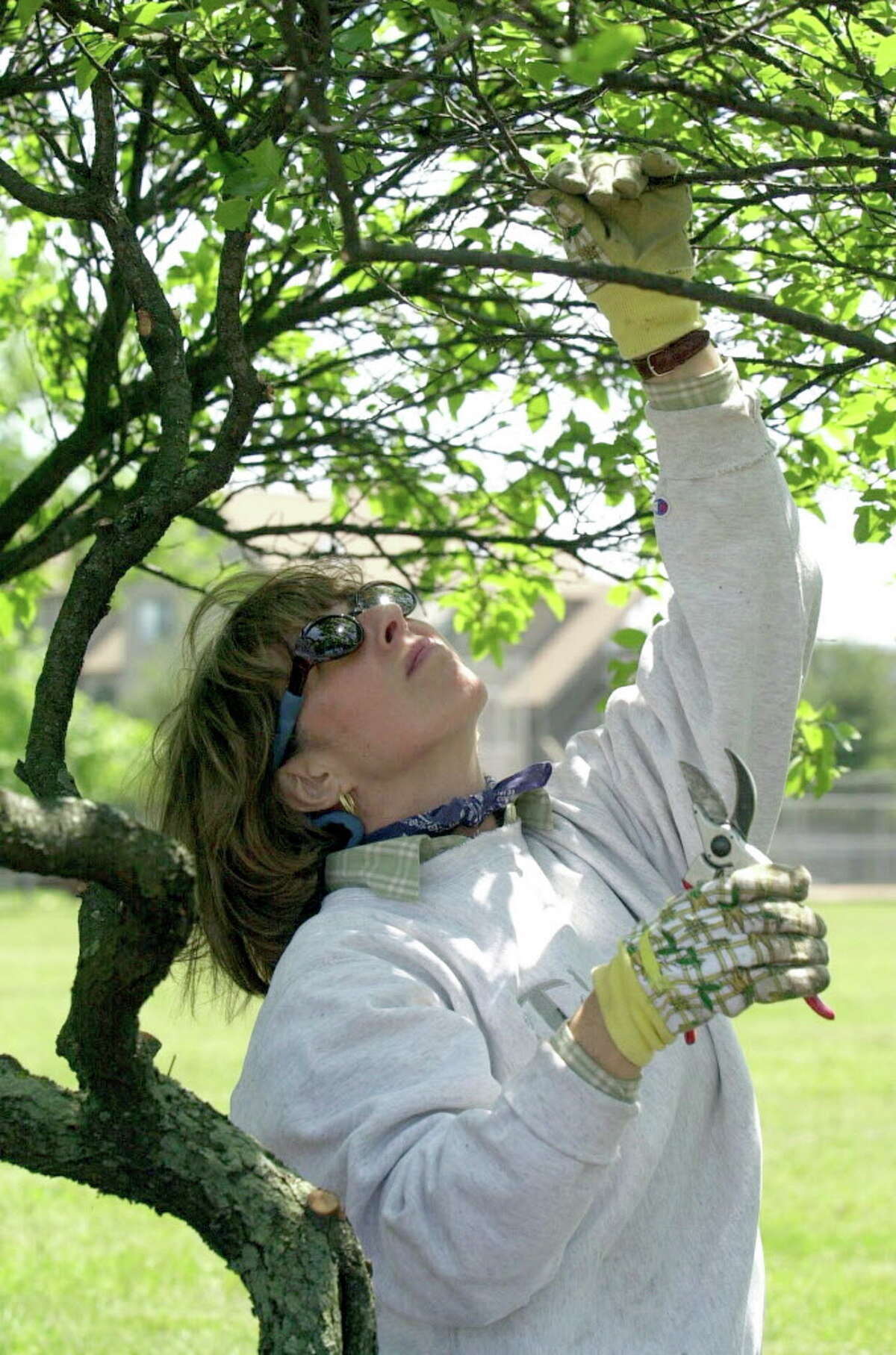 A member of the Shippan Point Garden Club clearing out and planting in a section of West Beach Park. The group will hold their annual fundraising sale to support their planting, tree replacement and other activities on May 7. Kathleen O'Rourke/File Photo
