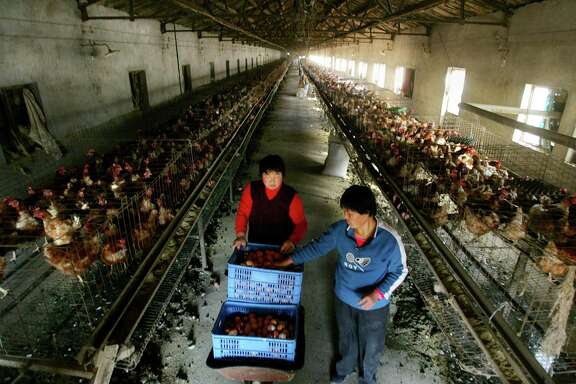 China is the world's biggest producer of eggs, but it is not clear whether the investment surge in eggs will have an impact on real-world prices. Egg futures have surged by as much as one-third since March.