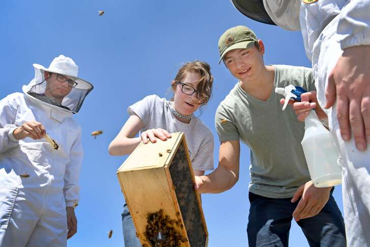 College students Justin Butera, Gabby Discafani and Austin Pyrch transfer honeybees from wooden boxes into hives on a rooftop apiary at George Washington University.