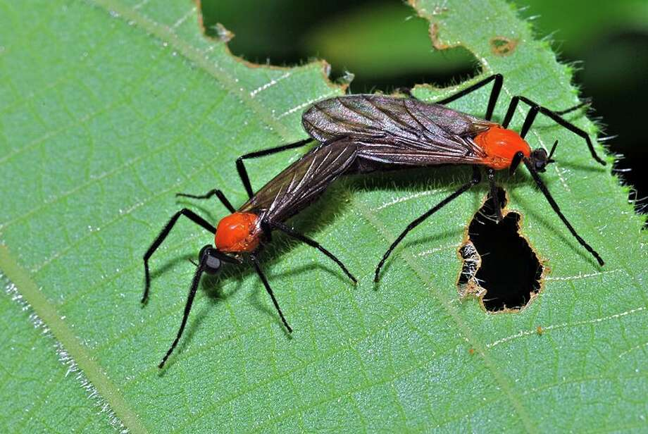 Lovebugs come out in droves during the April-May and August-September months.
