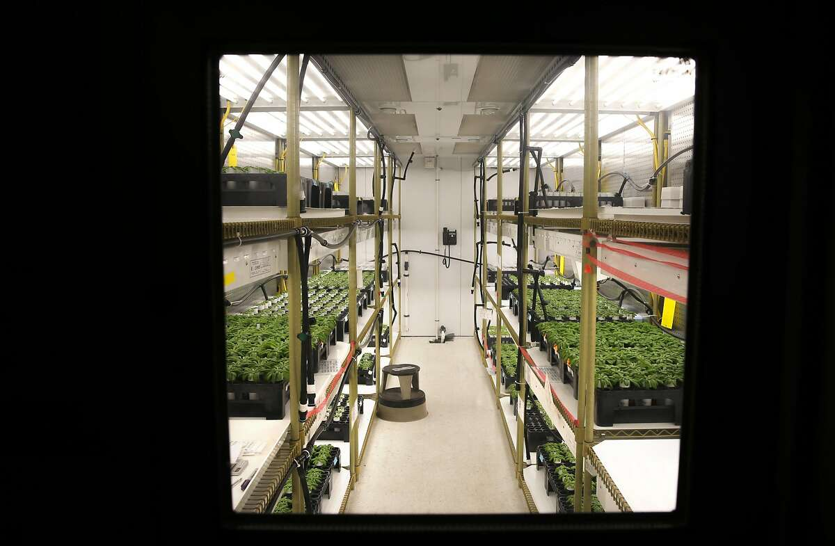 Research plants are produced in a growth chamber at Mendel Biotechnology on Tues. May 3, 2016, in Hayward, California. A subsidiary of Koch Agronomic Services LLC (KAS) has purchased the biological research and development business of Mendel Biotechnology Inc.