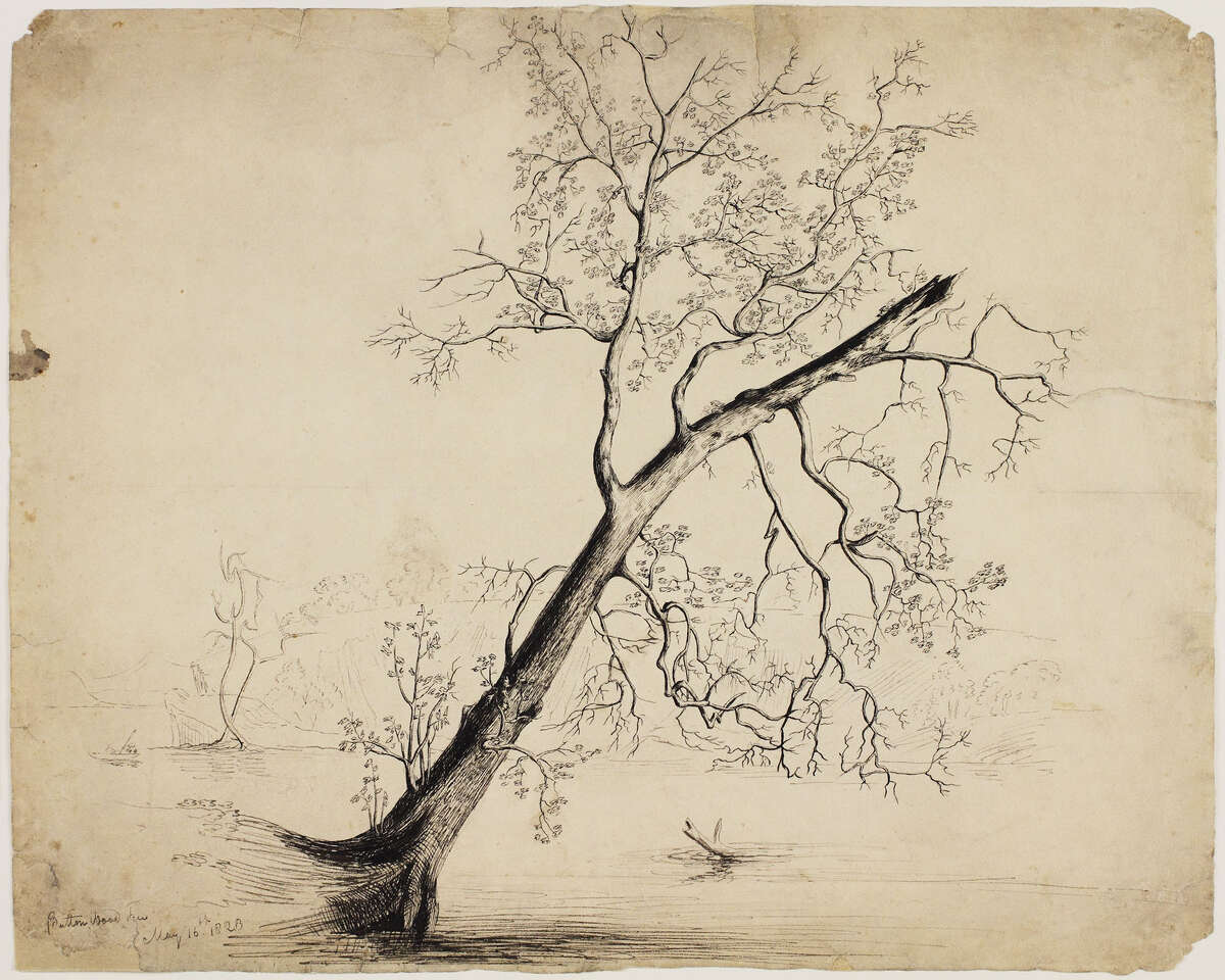 Button Wood Tree Thomas Cole (1801-1848) May 16, 1823 Ink/paper; 13 ½ x 16 7/8 in. Lower left: