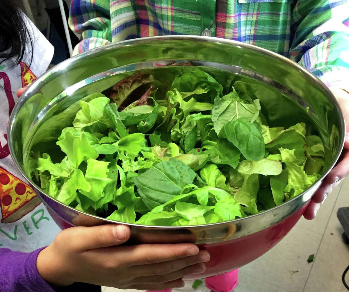 Sarah Noble Intermediate School fourth-grade teacher Tara Gee and her students tend to a Tower Garden in the classroom. The garden yields an assortment of greens.