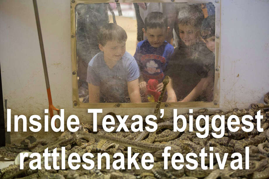 Three young boys look in to a pit of rattlesnakes during 2015 Sweetwater Jaycees World Largest Rattlesnake Roundup at the Nolan County Coliseum in Sweetwater Texas. Photo: Courtney Sacco, AP