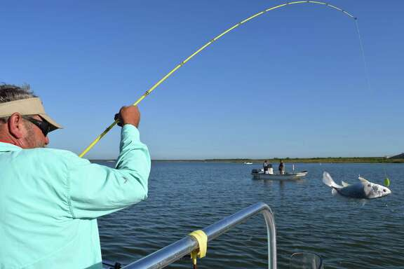 Guide David Crews hauls in a feisty gaspergou as a string of about a half-dozen other anglers have anchored near the Choke Canyon Reservoir dam to test their skills at filling up coolers full of the tasty freshwater drum.