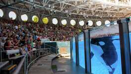 CEO and President Joel Manby said the company's decision to end all orca breeding and transition its shows toward more natural orca encounters — along with its partnership with the Humane Society — should help improve its performance over time.