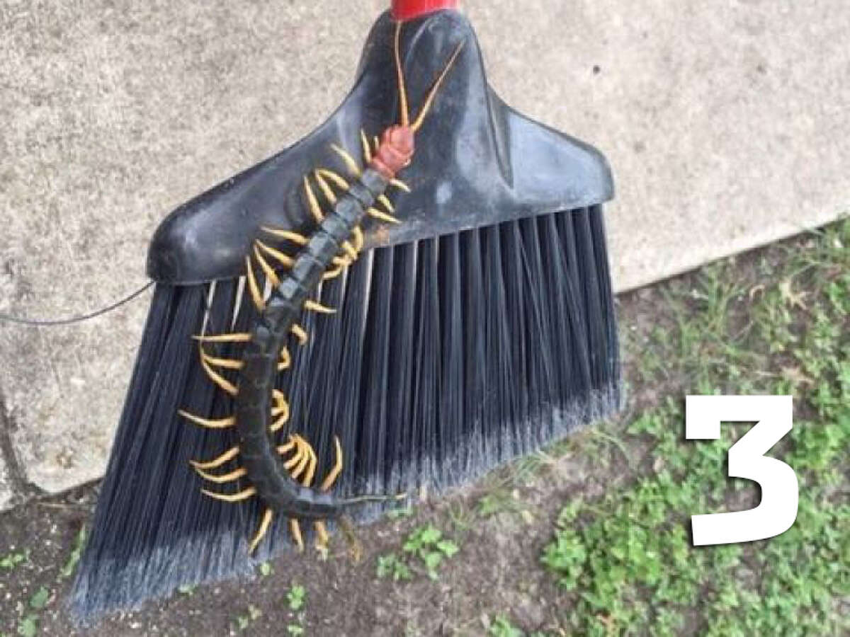 3. In general, centipedes live across the world and typically measure up to 6 inches in length. Their lifespan usually ranges from one to six years, according to Orkin.