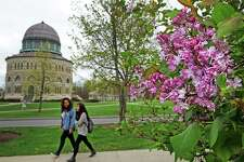 A lilac bush in bloom on the Union College campus Thursday May 5, 2016 in Schenectady , N.Y. (Michael P. Farrell/Times Union)