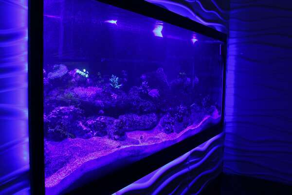 This fish tank is one of several tanks showcasing exotic fish and marine life at the San Antonio Aquarium. Guests will also get the chance to pet stingrays, feed koi and view a variety of reptiles and birds.
