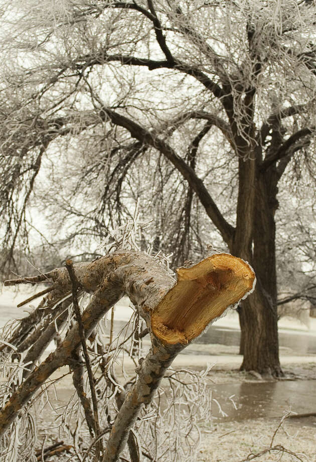 01-02-15 Tree limbs heavy with ice are sagging and breaking around Midland. Tim Fischer\Reporter-Telegram Photo: Tim Fischer