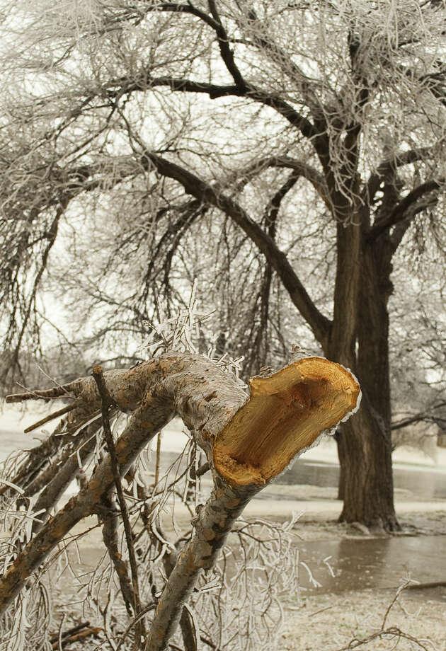 01-02-15 Tree limbs heavy with ice are sagging and breaking around Midland. Tim Fischer\Reporter-Telegram Photo: Tim Fischer