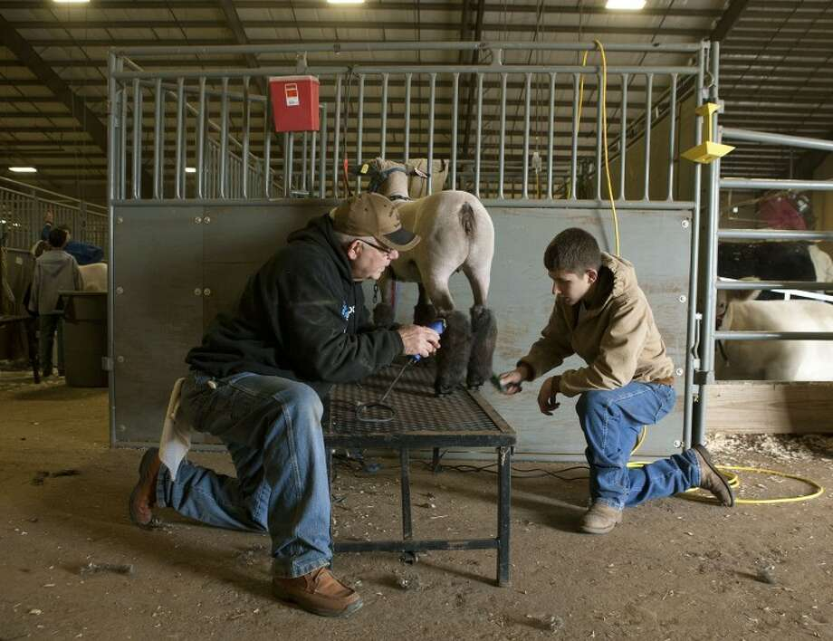 "Billy Sellars, left, helps his grandson Kody Keesler, 15, sheer ""Bertha"" for the medium wool show during the 2012 Midland County Livestock Show at the Horseshoe Arena. Photo: MRT File Photo"