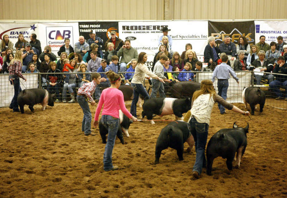 Hogs are herded on the show floor during the Midland County Livestock Show on Thursday at Horseshoe Arena. James Durbin/Reporter-Telegram Photo: JAMES DURBIN