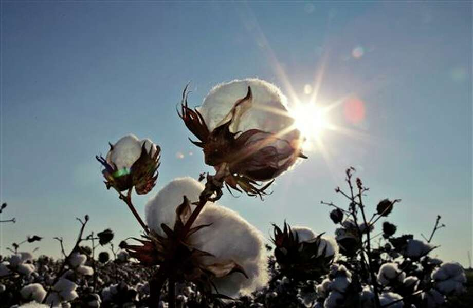 In this Oct. 12, 2007 file photo, the sun sets on a cotton field south of Lubbock, Texas. Photo: LM Otero / AP