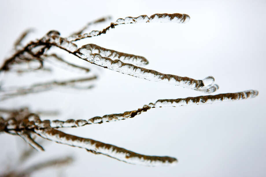 Frozen tree branches on the campus of Midland College on Saturday, Nov. 23. James Durbin/Reporter-Telegram Photo: JAMES DURBIN