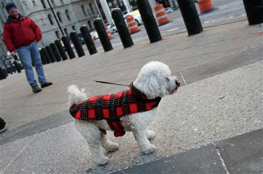 """Napoleon"" sports a sweater as he is walked by his owner, who declined to give his name, Tuesday, Jan. 7, 2014 in New York. Frigid air that snapped decades-old records will make venturing outside dangerous for pets as well as people. (AP Photo/Mark Lennihan) Photo: Mark Lennihan / AP"