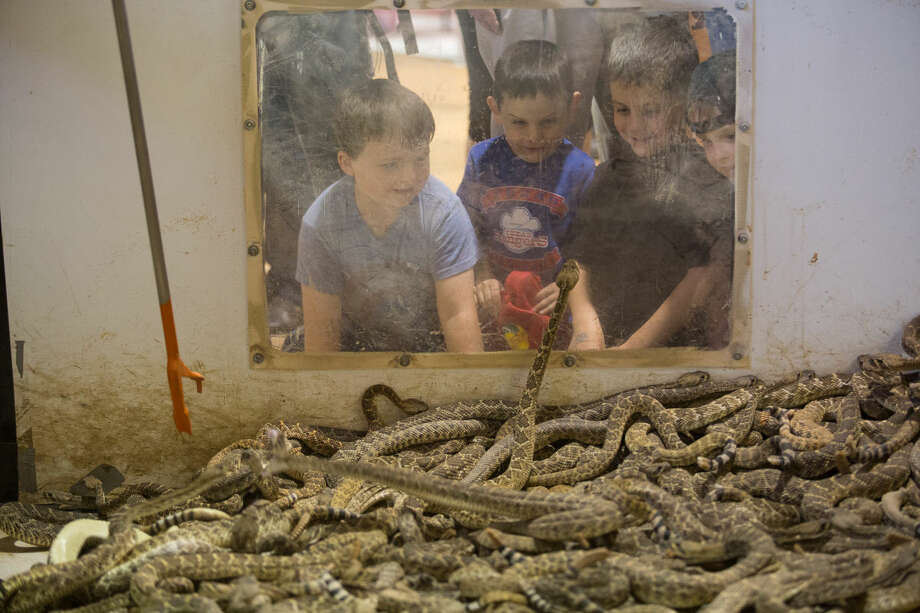Three young boys look in to a pit of rattlesnakes during 2015 Sweetwater Jaycees World Largest Rattlesnake Roundup at the Nolan County Coliseum in Sweetwater Texas. Photo: Courtney Sacco