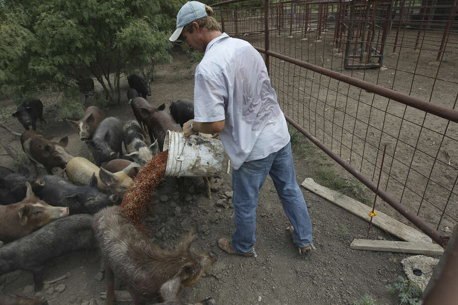 Farmer Fred Lyssy feeds pigs on his farm in Wilson County on the edge of the Eagle Ford Shale. Photo: San Antonio Express-News