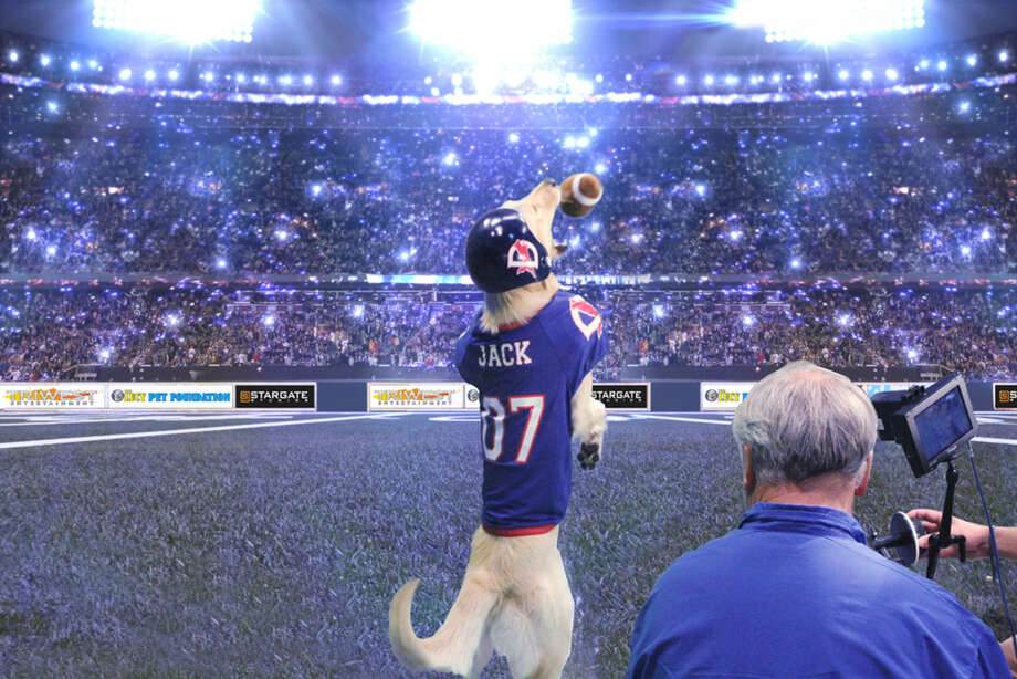 "In this image produced on Nov. 19, 2014, provided by the Lucy Foundation, cinematographer Sam Nicholson records quarterback Jack the dog in a scene in a fanciful Cats vs. Dogs football game scheduled to appear on Super Bowl Sunday, Feb. 1, 2015. It won't be part of the game broadcast but will be an alternative show dubbed the ""Kitten Bowl"" on the Hallmark Channel, three hours before the Super Bowl game on NBC. (AP Photo/Lucy Foundation, Betsy Martin) Photo: Betsy Martin"
