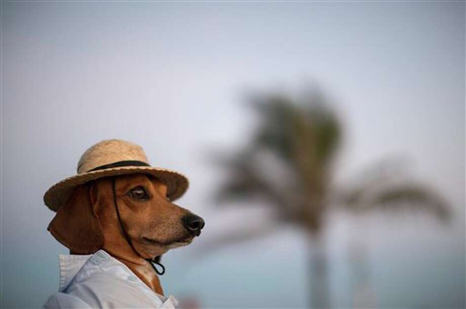 AP10ThingsToSee - A dog named Caique wears a hat and shirt on Arpoador beach in Rio de Janeiro, Saturday, Jan. 18, 2014. Caique's owners said they like to dress Caique up for dog parades and that they enjoy pedestrians taking his picture during his daily walks. (AP Photo/Felipe Dana, File) Photo: Felipe Dana / AP
