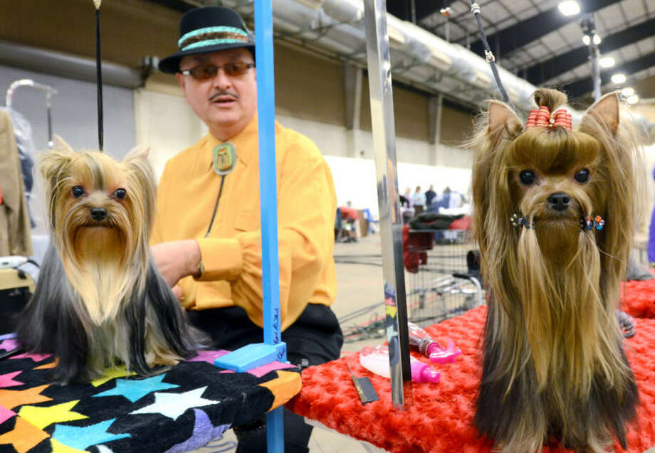 (File Photo) LeRoy Chavez of Clovis, New Mexico, prepares Ultima, left, and Ephraim, right, for competition during the West Texas Kennel Club Dog Show Saturday at Horseshoe Arena. James Durbin/Reporter-Telegram Photo: JAMES DURBIN