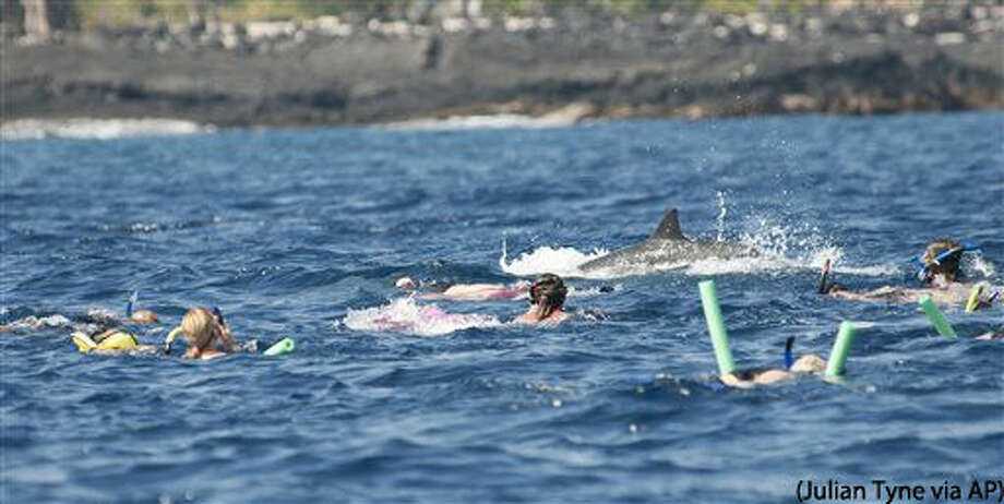 This Aug. 15, 2012 photo provided by Murdoch University dolphin researcher Julian Tyne shows people swimming near dolphins in Makako Bay in Kailua-Kona, Hawaii. Swimming with dolphins is a dream for many tourists visiting Hawaii, but federal regulators are preparing to propose rules that could ban or limit swimming with Hawaii's spinner dolphins out of concern humans are depriving the nocturnal animals of the rest they need. Picture taken under NOAA permit GA LOC15409. (Julian Tyne via AP) MANDATORY CREDIT Photo: Julian Tyne