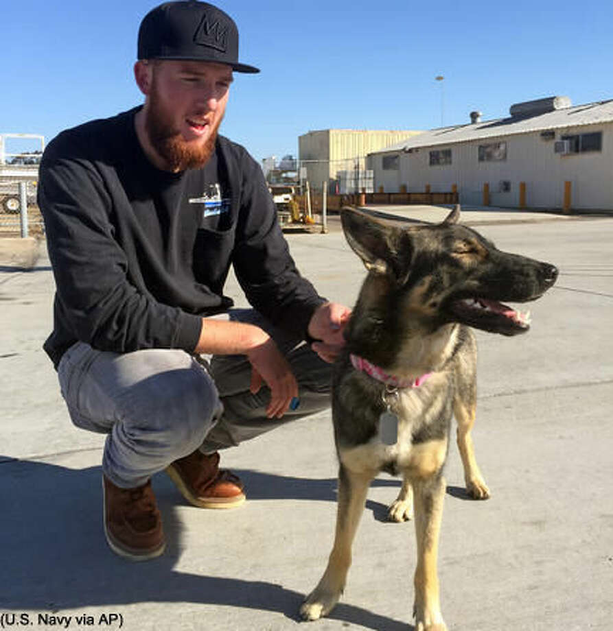 In this photo provided by the Navy, Conner Lamb squats next to Nick Haworth's 1 1/2-year-old German shepherd Luna, who fell overboard from his boat in the ocean off the Southern California coast in February, arrives at Naval Base Coronado in San Diego, Wednesday, March 16, 2016 Luna was found Tuesday on San Clemente Island, a Navy-owned training base. Haworth was working on a boat two miles from the island when Luna disappeared Feb. 10. (U.S. Navy via AP) MANDATORY CREDIT Photo: HOGP