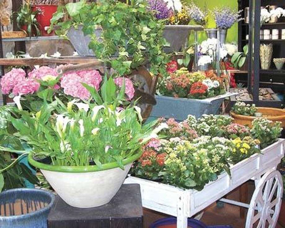 Kalanchoes, calla lilies and hydrangeas are among the flowery beauties you can find at Flowerland, 413 Andrews Highway.