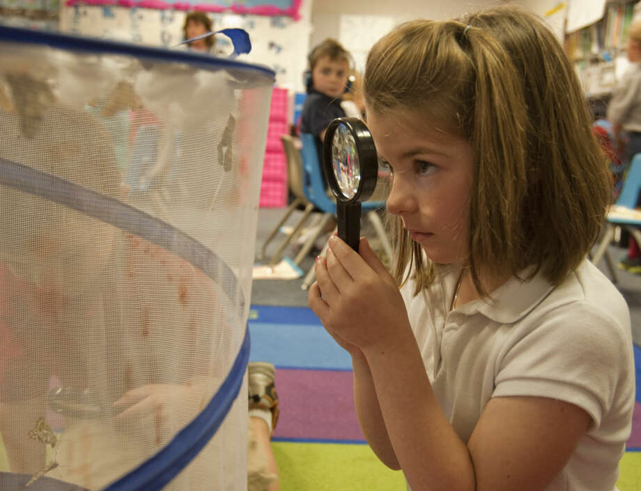 Emersyn Champagne, kindergardener at Washington Magnet School, examine their classes butterflies Monday, 4-13-15, they are growing as part of the upcoming Hospice Butterfly Release. Tim Fischer\Reporter-Telegram Photo: Tim Fischer