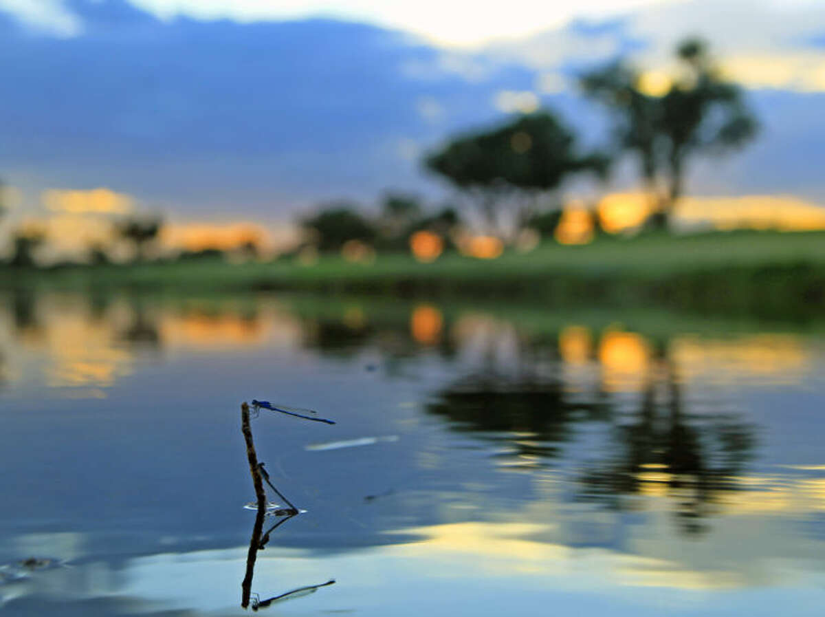 A bluet damselfly rests over a pond on the front nine of the Ranchland Hills Country Club on Monday. James Durbin/Reporter-Telegram