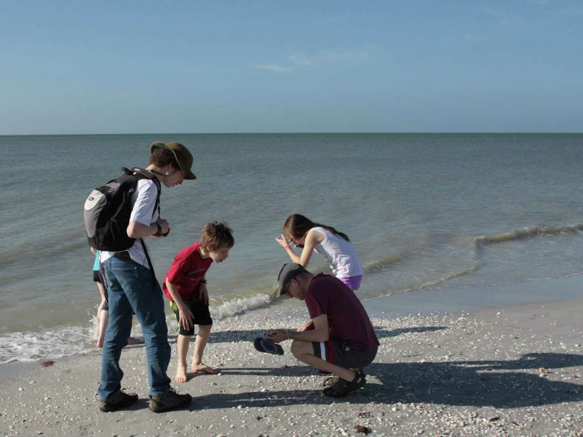 Even, from left, and Zachary Dankowicz of Champaign, Ill., and their cousin Aviva Brickman and her father, Aaron Brickman, of Potomac, Md., search for shells on Sanibel Island, Fla.