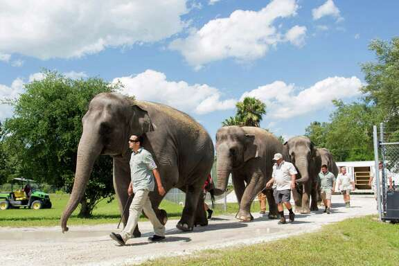 Three Asian elephants arrive at their new home in Florida after retiring from the Ringling Bros. and Barnum & Bailey Circus.