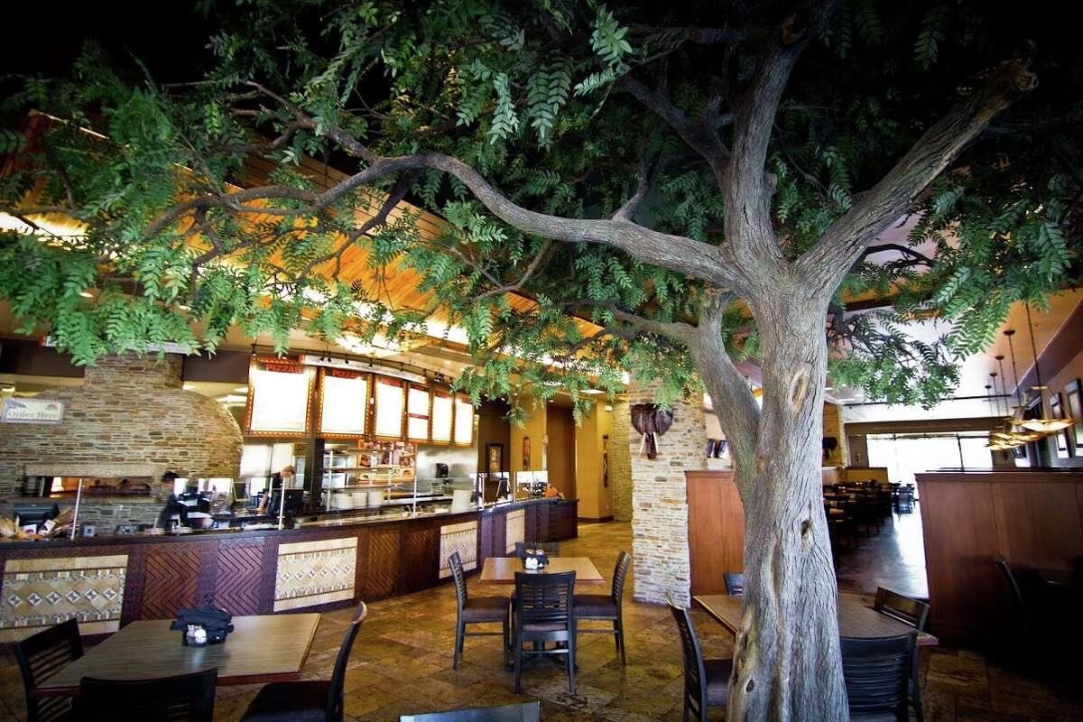 An iconic African acacia tree is a feature of the open dining rooms at Malawi's Pizza. The chain donates a meal to children in Malawi for each meal sold.