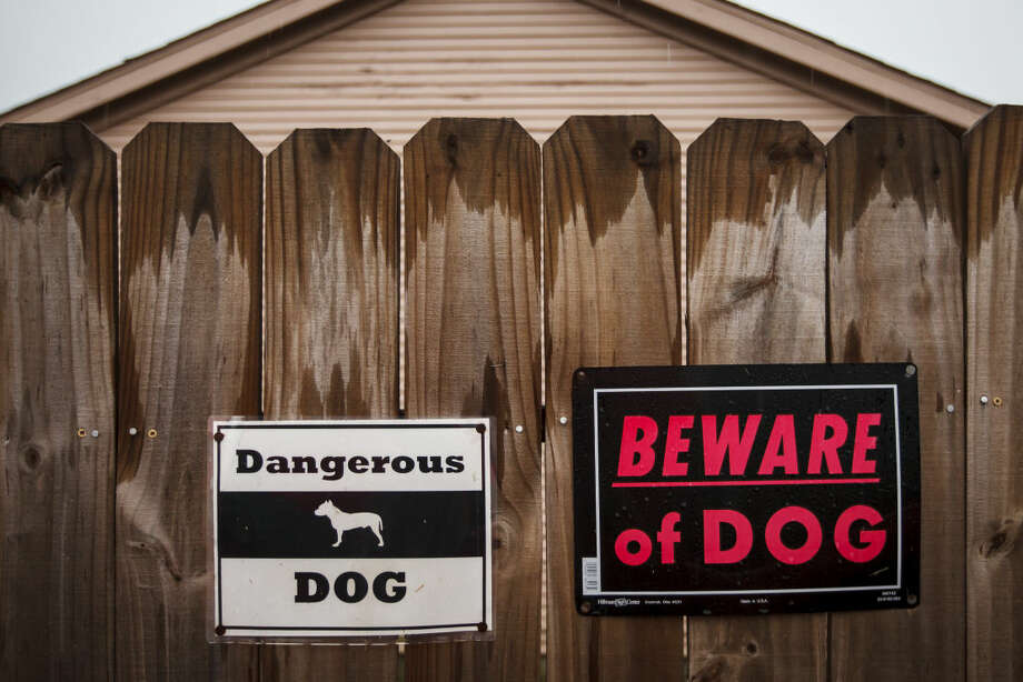 "Signs at Rhonda Ayala's house warn people of Bandit, a Red Nose Pitbull, Thursday, March 29, 2012, in Houston. ""He's a good dog,"" Rhonda Ayala said. ""I just didn't train him when we first got him from a friend."" Bandit was put into quarantine twice by BARC officials after he nipped two people. ""He was trying to protect me. He's just a puppy in a big body."" ( Michael Paulsen / Houston Chronicle ) Photo: Michael Paulsen"