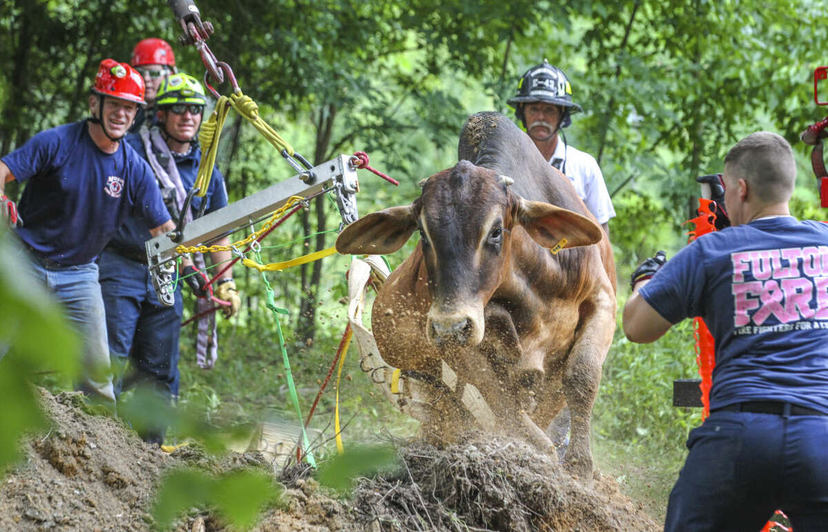 Animal rescue crews help a bull that was trapped inside a well on Wednesday, June 3, 2015 in Fairburn, Ga. The 1,500 pound bull named Boy fell through rotten wood that was covering the well on his property south of Atlanta. Crews used a backhoe to dig a bigger hole so the animal could walk out. (John Spink/Atlanta Journal-Constitution via AP) MARIETTA DAILY OUT; GWINNETT DAILY POST OUT; LOCAL TELEVISION OUT; WXIA-TV OUT; WGCL-TV OUT