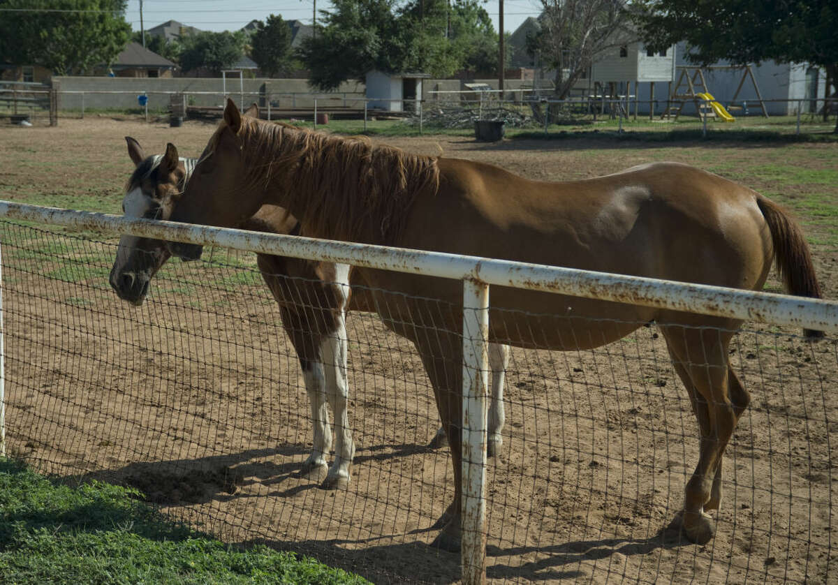 Homeowners living in the Greenbelt are allowed to keep livestock on their land inside city limits seen Saturday 7-25-15. Tim Fischer\Reporter-Telegram