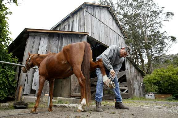 Lesley Wolff cleans his horse's hooves at Golden Gate Dairy Stables in Muir Beach, California, on Wednesday, May 4, 2016.