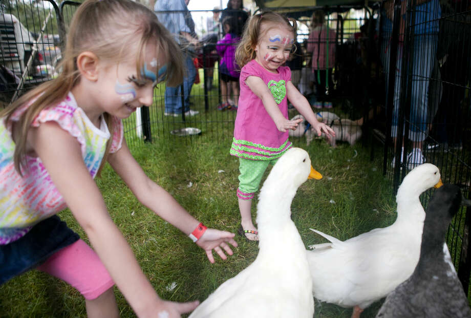 Alivia Adams, age 4, and Sophia Adams, age 2, chase ducks in the petting zoo during Septemberfest 2014 at Museum of the Southwest. This year's petting zoo will features lemurs, a zebra, a camel and a kangaroo. Photo: James Durbin