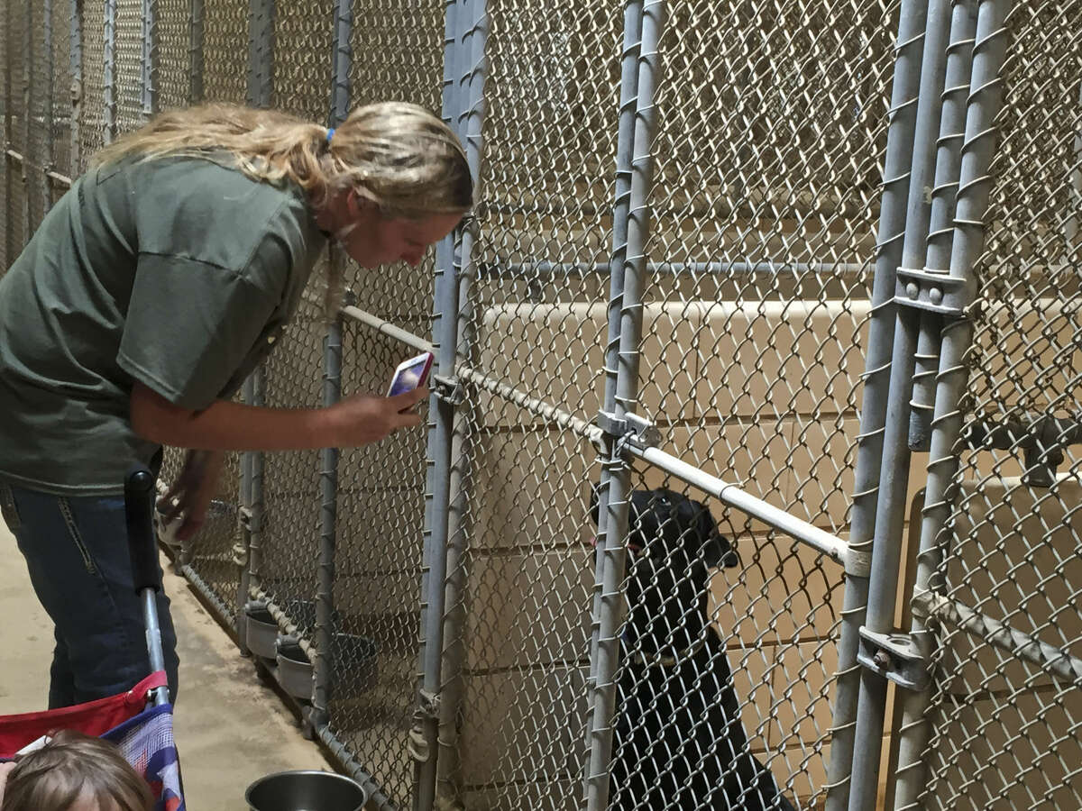 The city of Midland Animal Services shelter will be receiving updates to prevent illness and reduce noise in the kennel.