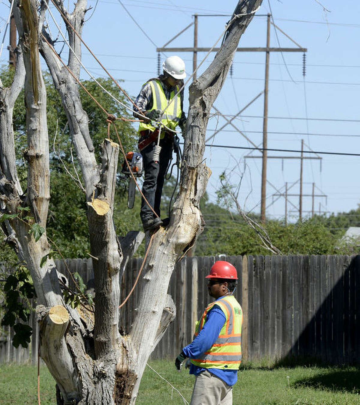 Workers take down a tree at a home on Lanham Street to allow access to high power lines behind the house, Tuesday, Oct. 13, 2015. James Durbin/Reporter-Telegram