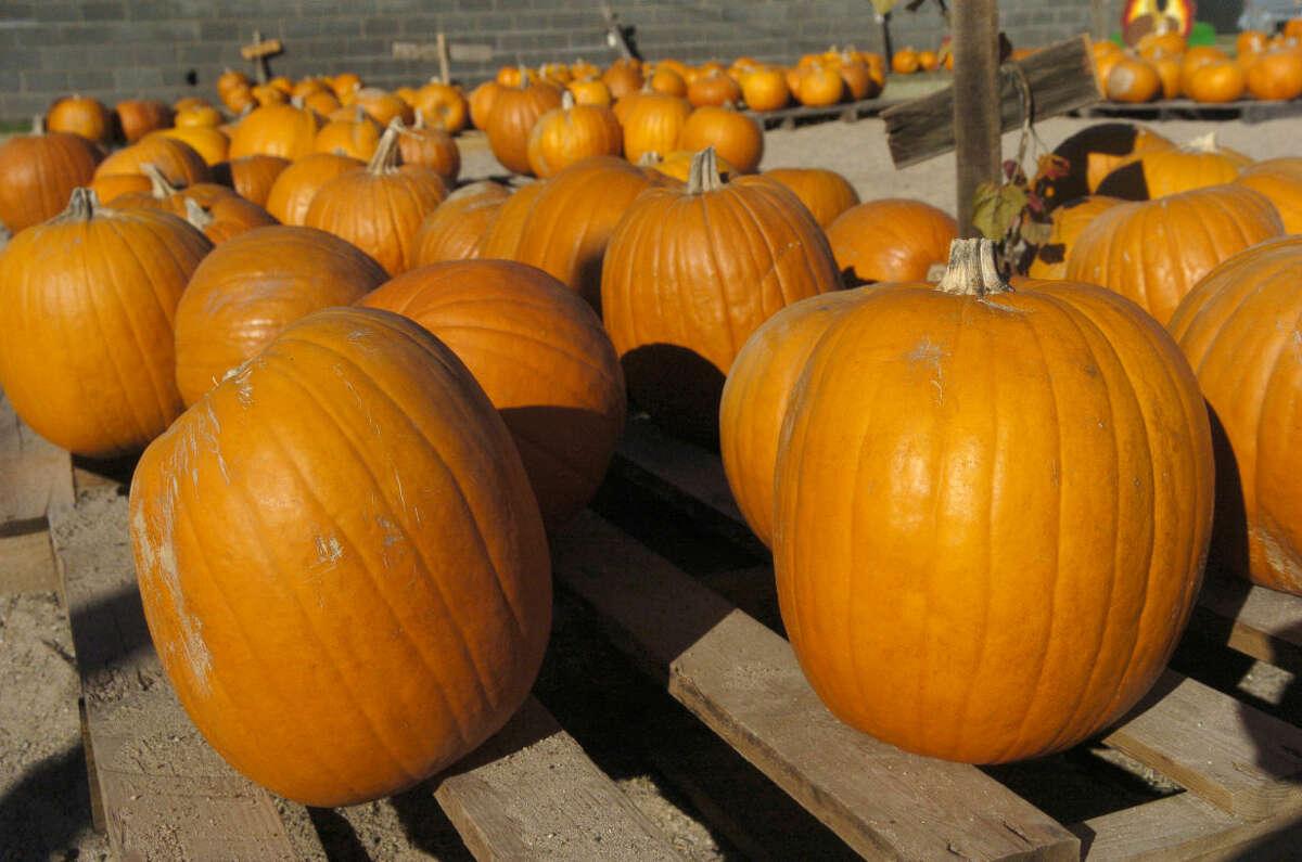 Pumpkins still available at St. Luke's Pumpkin Patch. Photo by Tim Fischer 10\30\08