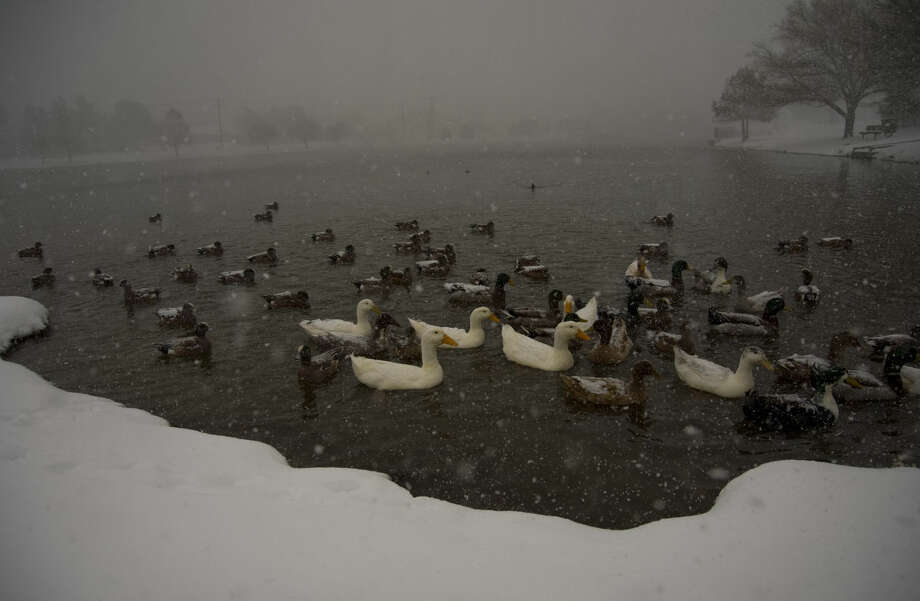 Ducks flock together Sunday 12-27-2015 at Wadley Barron Pond as heavy snow and wind cause near white out conditions in Midland. Tim Fischer\Reporter-Telegram Photo: Tim Fischer