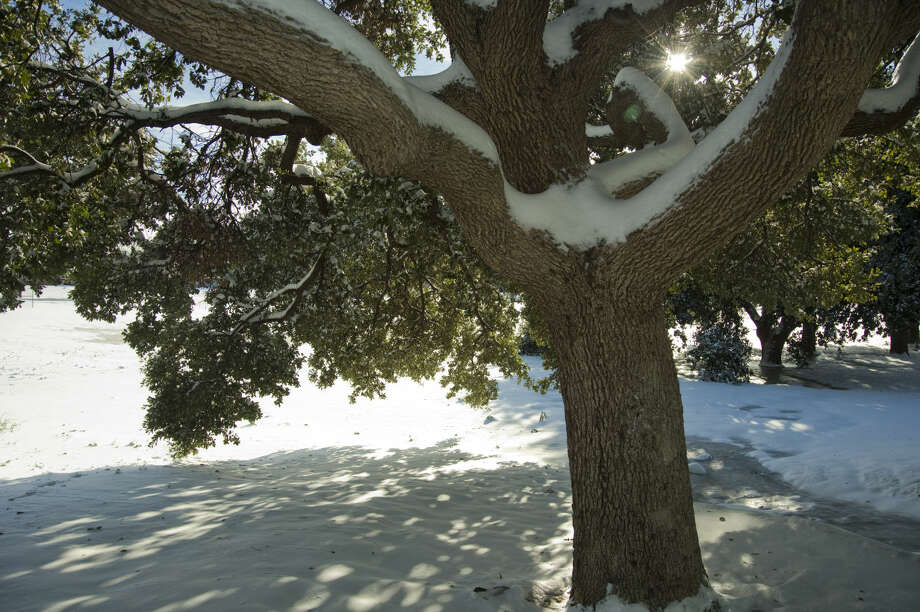 The sun shines bright Monday 12-28-2015 beginning to melt some of the snow and weighing down tree branches still covered with snow and ice. Tim Fischer\Reporter-Telegram Photo: Tim Fischer