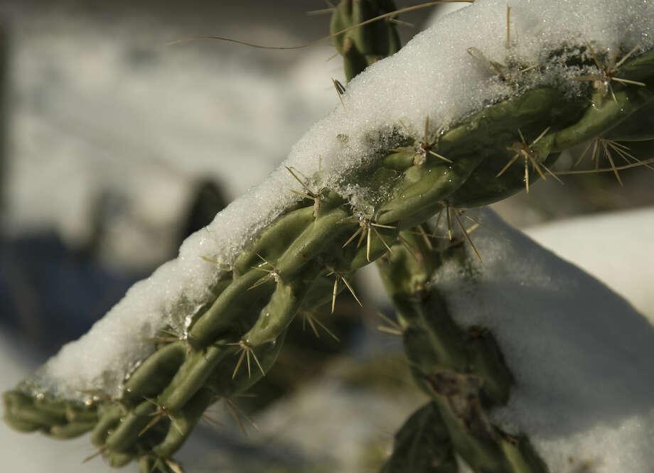 Snow still covers plants around Midland Monday 12-28-2015. Tim Fischer\Reporter-Telegram Photo: Tim Fischer