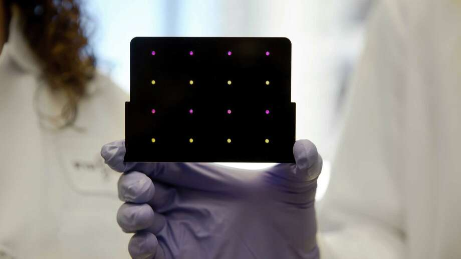 The yellow dots turn purple when Zika is detected on an inexpensive rapid test developed by a consortium of researchers and introduced last week.  Photo: WYSS INSTITUTE AT HARVARD UNIVERSITY, HO / WYSS INSTITUTE AT HARVARD UNIVERSITY