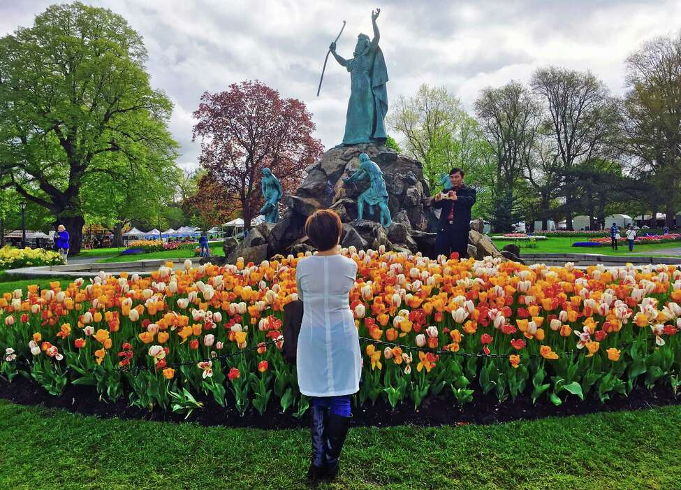 Buu Tran of Albany takes a photograph of his wife Thuy Tran during the 2016 Tulip Festival in Washington Park on Saturday May 7, 2016 in Albany , N.Y. (Michael P. Farrell/Times Union)