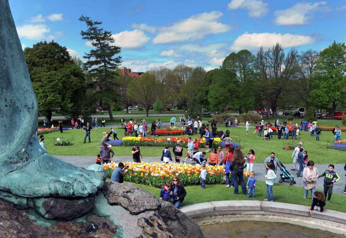 69th Annual Albany Tulip Festival.