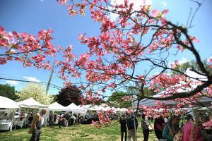 Blue skies and sunshine appeared in the afternoon for the final day of the 81st Annual Dogwood Festival at the Greenfield Hill Congregational Church in the Greenfield Hill section of Fairfield, Conn. on Sunday, May 8, 2016. The break from days of rainy weather brought heavy attendance to the event, with parked cars lining side streets in the area.