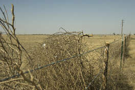 Tumbleweeds and other debris are blown around Midland Monday 02-01-16 as high winds and dry conditions blow weeds, dirt and trash around. Tim Fischer/Reporter-Telegram