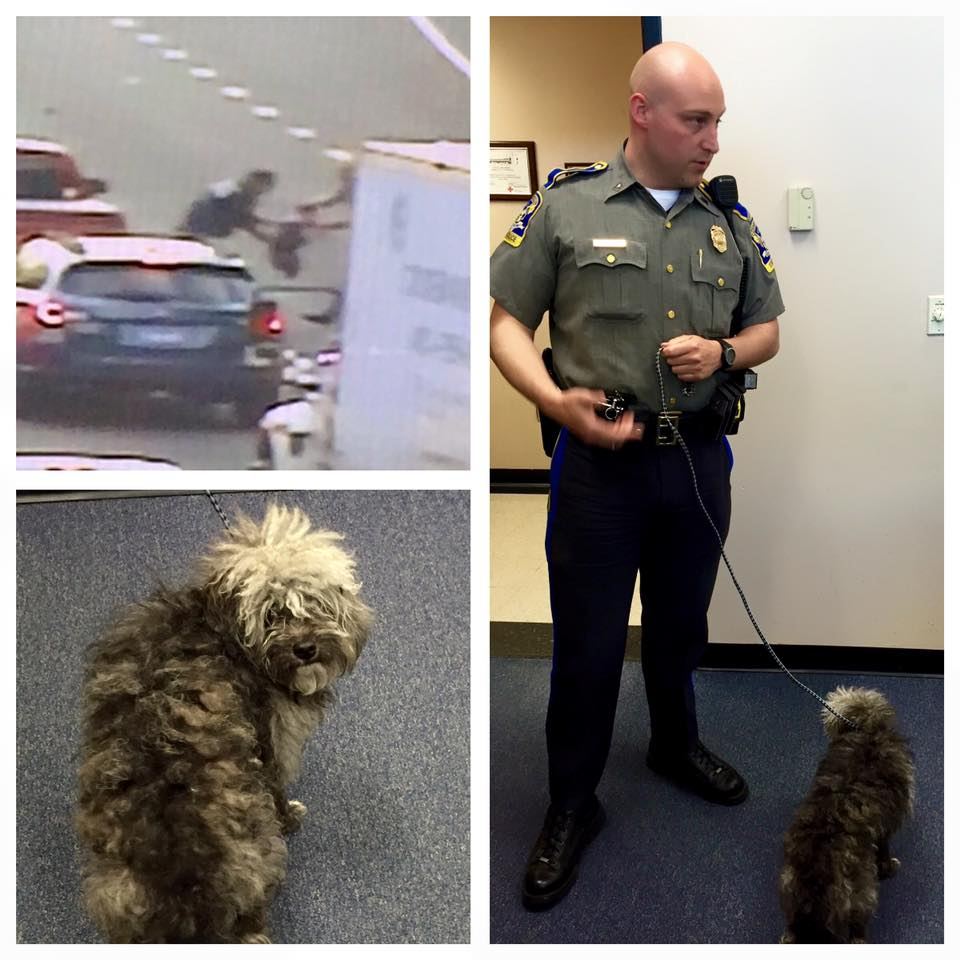 Lucky Dog Rescued From Rush Hour Traffic Connecticut Post